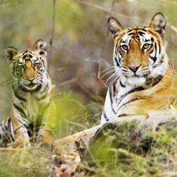 Corbett Tiger Safari Tour Package
