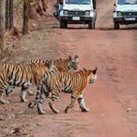 Wildlife Tour to Corbett