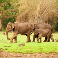 Short Escape to Bandipur National Park Package