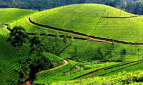 4 Days Kerala Tour Package