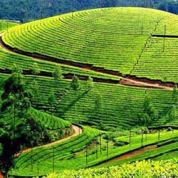 Sealord Kerala Tour Package