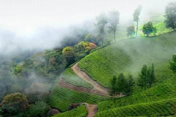 Premium Kerala Tour Package - 1