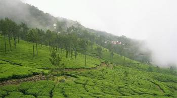 2 N / 3 D Munnar Package for Diwali
