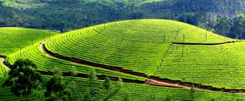 3 N / 4 D Kerala Tour Package - Delux