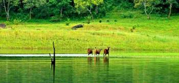 05 NIGHTS / 06 DAYS DELUX KERALA TOUR PACKAGE