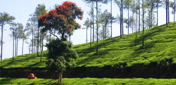 2 n / 3 D Kerala Tour Package - Kuttikkanam