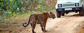 Assam-5 Days-Manas National Park Tour