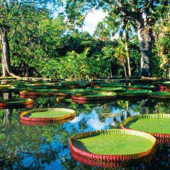 Pamplemousse Botanical Garden