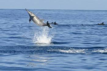 Catamaran Cruise to Ile Aux Bénitiers: Dolphin watch, Crystal Rock & Lunch Tour