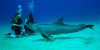 Dolphin Swimming, Ile aux Benitiers & Crystal Rock: Full Day including Lunch & Transfer