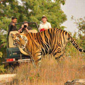 Corbett Weekend Tour Package