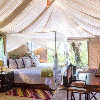 TUTC Kohima Luxury Camp Tour