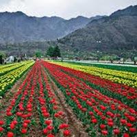 Mesmerising  Kashmir Tour