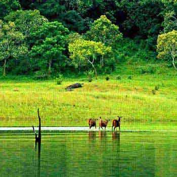 Munnar - Thekkady - Allappey House Boat - Cochin Tour