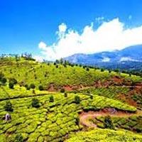 Munnar - Cochin Tour