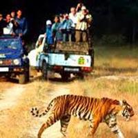 Delhi - Nanital - Lake Tour - Corbett National Park - Delhi Tour
