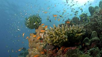 5 Days Andaman Package