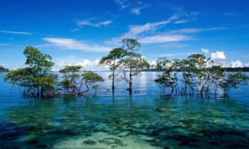 Trip Andaman Holidays Tour