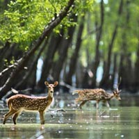 Week End Trip of Sundarban Mangroves Tour