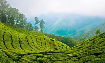 Graceful Kerala Tour