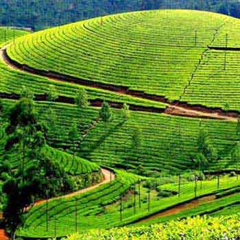 Gems of Kerala Tour Package