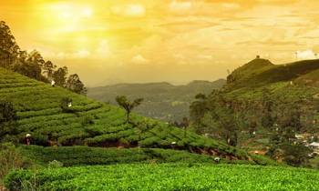 Kerala 4 Nights - Couple Special Tour