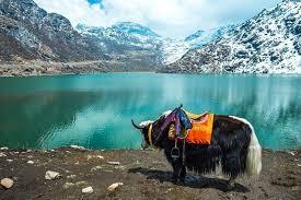 Enjoyable Darjeeling with Gangtok
