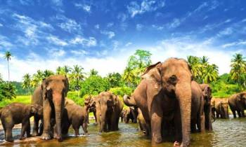 Mesmerizing Sri Lanka Iii Tour