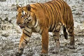 2 Nights-3 Days Sundarban Tour Package from Kolkata