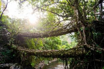 Shillong – Day Trip to Cherrapunjee+ Guwahati  Tour