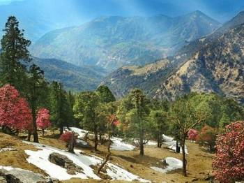 Uttaranchal Delight 7days Package