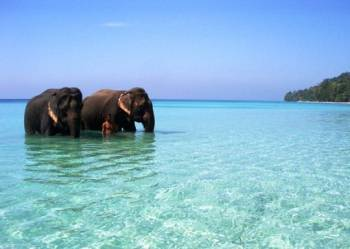 7 Days Andaman Tour