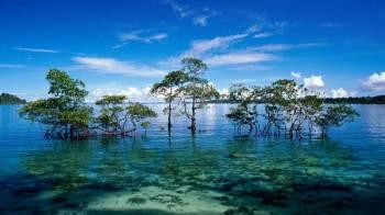 5 Days Andaman Honeymoon Tour
