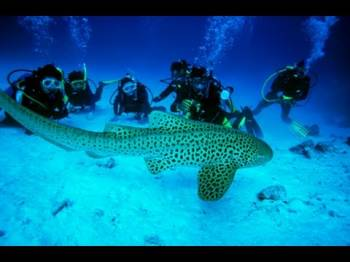 Andaman with Scuba Dive  04 Days Tour
