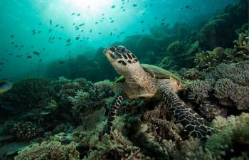 Scuba Diver Course (sd)