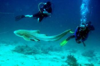 Andaman with Scuba Dive 04 Days