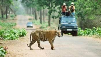 Nagpur-tadoba National Park-nagzira Wildlife Sanctuary-nagpur Tour-crazy-mh-12