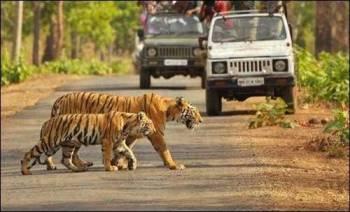Bilaspur-jungle Safari-temple Tour-crazy-cg-04