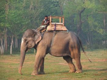 Bhedaghat–bandhavgarh–jungle Safari-crazy-mp-03