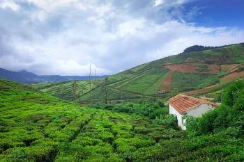 Mesmerizing Coorg and Ooty Tour