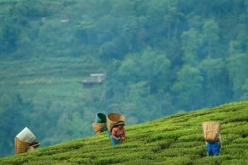 Sikkim, Lachen, Lachung 5n - 6d  Tour Package