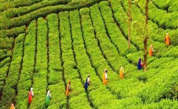 Kerala Tour5D/4N
