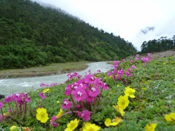 Gangtok, Lachung, Darjeeling Tour