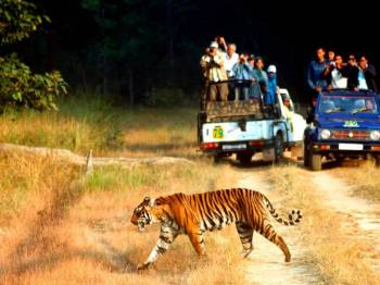 Mussoorie to Corbett Tour