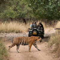 Ranthambore Weekend Tour Ex Delhi