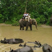 Nepal wildlife Tour