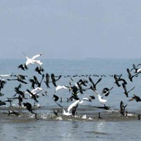 Golden Triangle Birdlife Tour