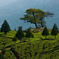 Honeymoon In Darjeeling Package