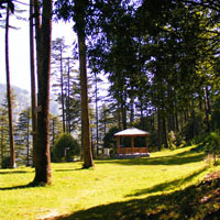 Mussoorie - Dhanaulti Tour