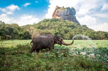 Sigiriya, Kandy and Colombo Tour